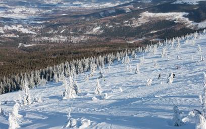 Narciarze na czerwonej trasie narciarskiej z Kopy w Karpaczu