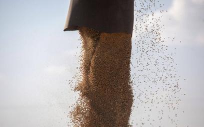 Wysokie ceny produktów rolnych. Wzrosty w niemal wszystkich kategoriach