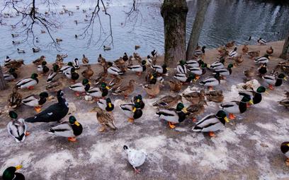 """""""Kaczkomaty"""" uczą, jak dokarmiać ptaki"""