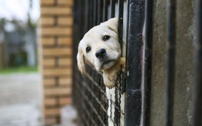 """Brytyjczycy na potęgę pozbywają się """"lockdownowych"""" psów"""