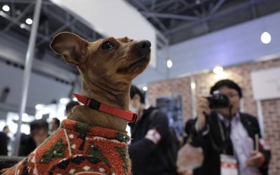 Nowa gra. Polska firma proponuje tresurę psów