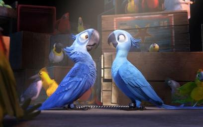"""Ptak, który był bohaterem filmu """"Rio"""", wyginął"""