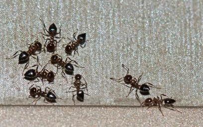 Rekompensata za wczasy all inclusive z mrówkami