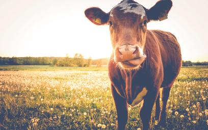 Po wegańskim mięsie czas na mleko. Smakuje jak krowie