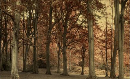 Zagrożonych wyginięciem jest 17,5 tys. gatunków drzew