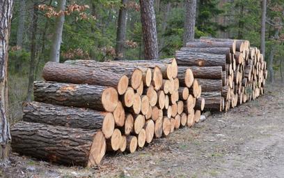 Usunięcie drzew kosztuje