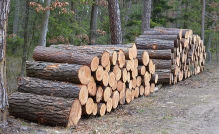 Rząd przygotowuje regulacje, które ograniczą eksport nieprzetworzonego drewna