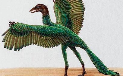 Praptak Archaeopteryx lithographica był wielkości gawrona. Miał uzbrojony w zęby pysk i pazury na sk