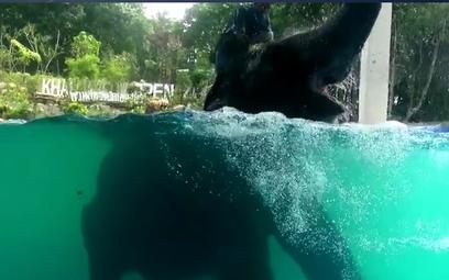 Obrońcy praw człowieka: Zamknąć zoo, w którym słonie występują pod wodą