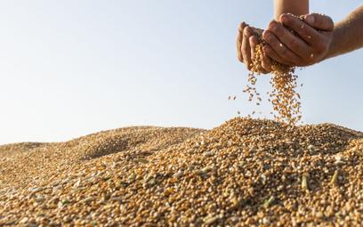Indeks światowych cen żywności FAO znalazł się na najwyższym poziomie od września 2011 r.