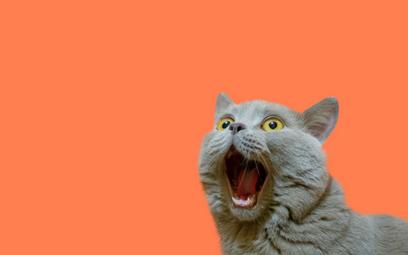 Naukowcy: Koty przywiązują się do właścicieli jak dzieci do opiekunów