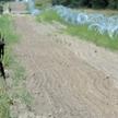 Pas drogi granicznej na polsko-białoruskiej granicy w Kopczanach