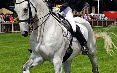 Ujeżdżenie, czyli konie w tańcu