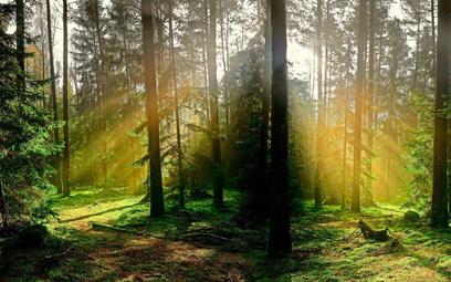 """Dzięki technologii bank """"zaoszczędził"""" 3,8 ha lasu"""