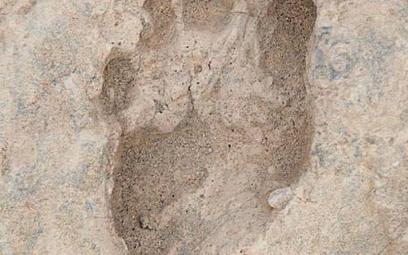 Odciski pradawnych stóp odnaleziono w północnej Kenii