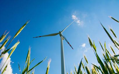 Wiśniewski: blokowanie wiatraków jest szkodliwe
