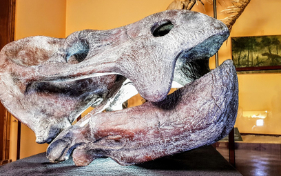 Polscy naukowcy odkryli koło Lisowic szczątki gada sprzed ponad 200 mln lat.