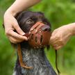 Sądy uchylają uchwały ws. zakładania psom kagańców.