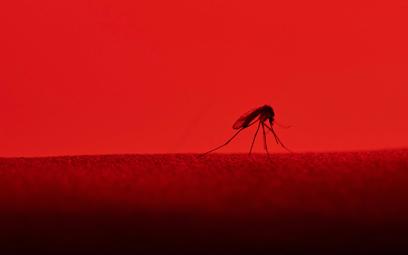 Opryski szkodzą nie tylko komarom