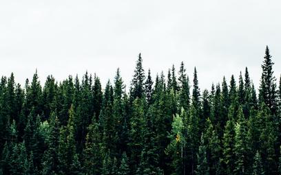UE przecenia rolę biomasy w OZE, napędzając wycinki lasów