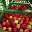 Producenci jabłek biją rekordy eksportu