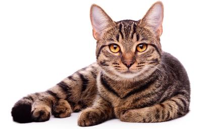Szwecja: 90-latek dokarmiał koty. Teraz ma za to zapłacić