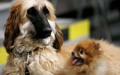Wystawa psów rasowych w Poznaniu