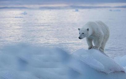 Arktyka: Białe niedźwiedzie atakują rosyjską stację badawczą