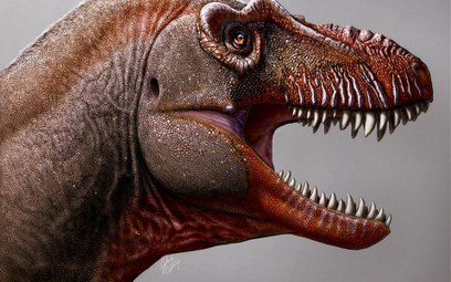 Naukowcy odkryli nowy gatunek dinozaura. Był krewnym T. Rexa