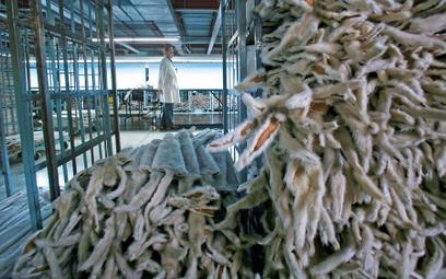 Szczepan Wójcik: Proces humanizowania zwierząt, animalizowania człowieka
