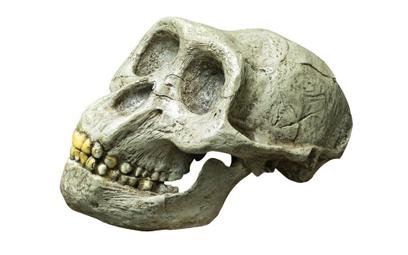 Geny neandertalczyków odpowiadają za ostry przebieg COVID?