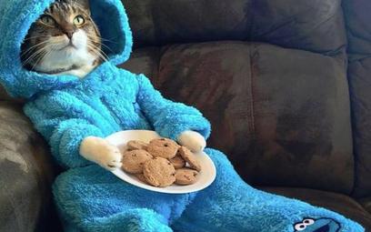 """Ambasada USA w Australii przeprasza za """"kota w piżamie"""""""