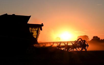 Dobry rok dla pszenicy w Niemczech i Polsce