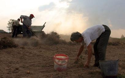 Żona rolnika może być bezrobotną