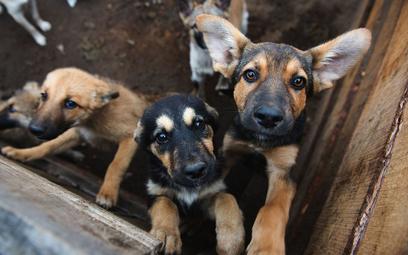 Z obawy przed Covid-19 zastrzelono 15 psów