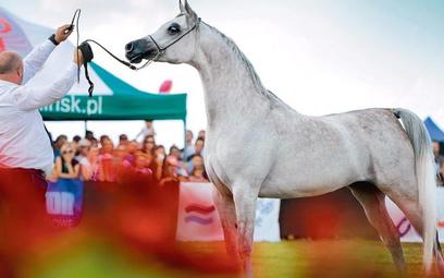 Perfinka została wylicytowana za rekordową sumę 1,25 mln euro