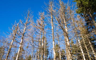 Za zatrucie drzew toksyczną sybstancją odpowiada posiadacz działki - wyrok WSA