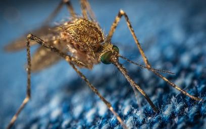 Agresywny owad w mieście. Walczą z nim opryskami albo jerzykami