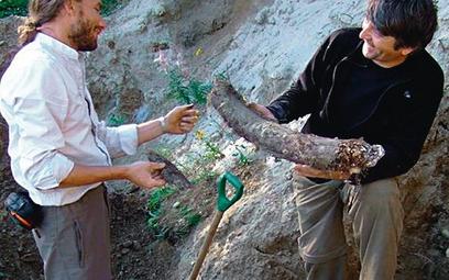 Ludovic Slimak i Paweł Pawłow oglądają odkryty kieł mamuta