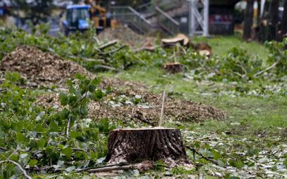 Budowanie na terenach zielonych - czy jest legalne