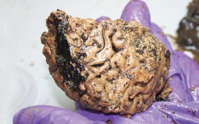 Najstarszy mózg Wielkiej Brytanii