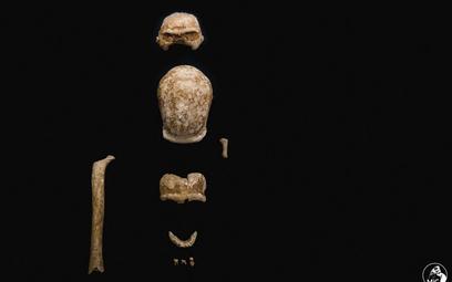 Włochy: Odkryto szczątki dziewięciorga neandertalczyków