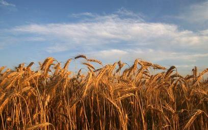 Rolnik z dopłatami bez prawa do umorzenia składek - wyrok WSA