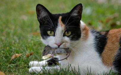 Sztuczna inteligencja wpuści kota do domu. Albo i nie