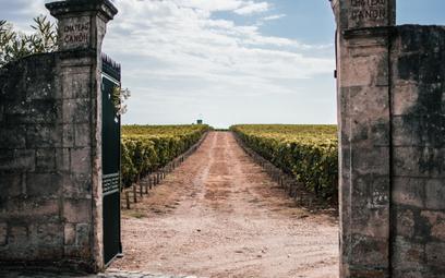 Ziemia na wagę złota: ile kosztują winnice we Francji?