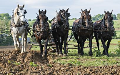 Rolnicy nie będą potrzebni? Zastąpią ich autonomiczne roboty