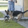 Kodeks cywilny przewiduje obowiązek naprawienia szkody wyrządzonej osobie przez zwierzę, które chowa