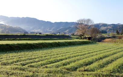 RPO: ograniczenia w obrocie prywatną ziemią rolną mogą naruszać konstytucję