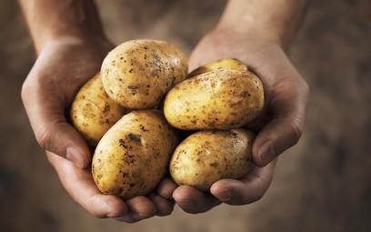 Ziemniaki z paszportem. Będzie wiadomo, czy są z Polski