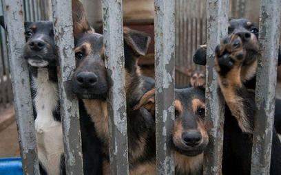 Najczęściej krzywdzone są psy. Na zdjęciu schronisko dla bezdomnych zwierząt w Żyrardowie